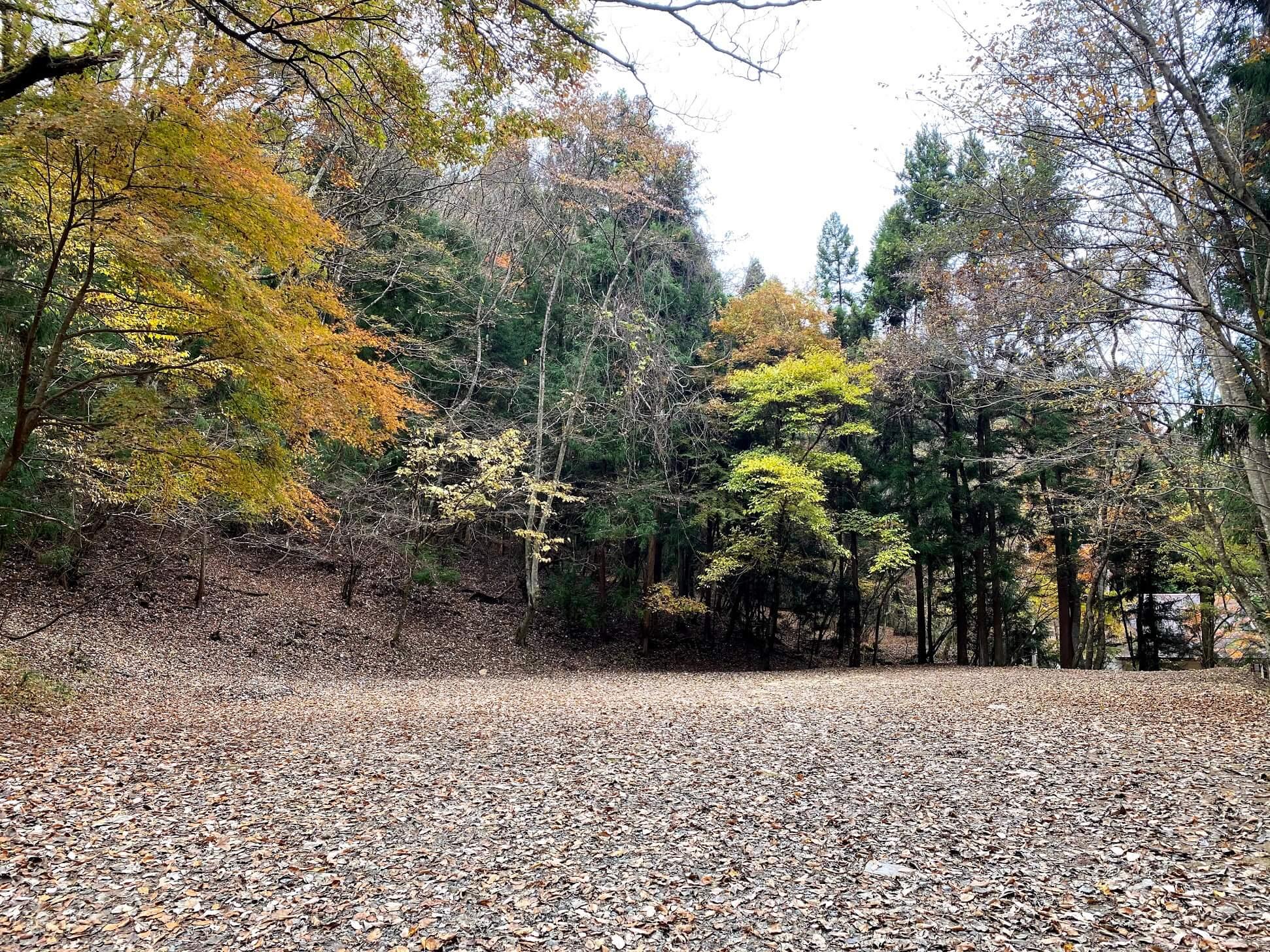 道志の森キャンプ場 サイト