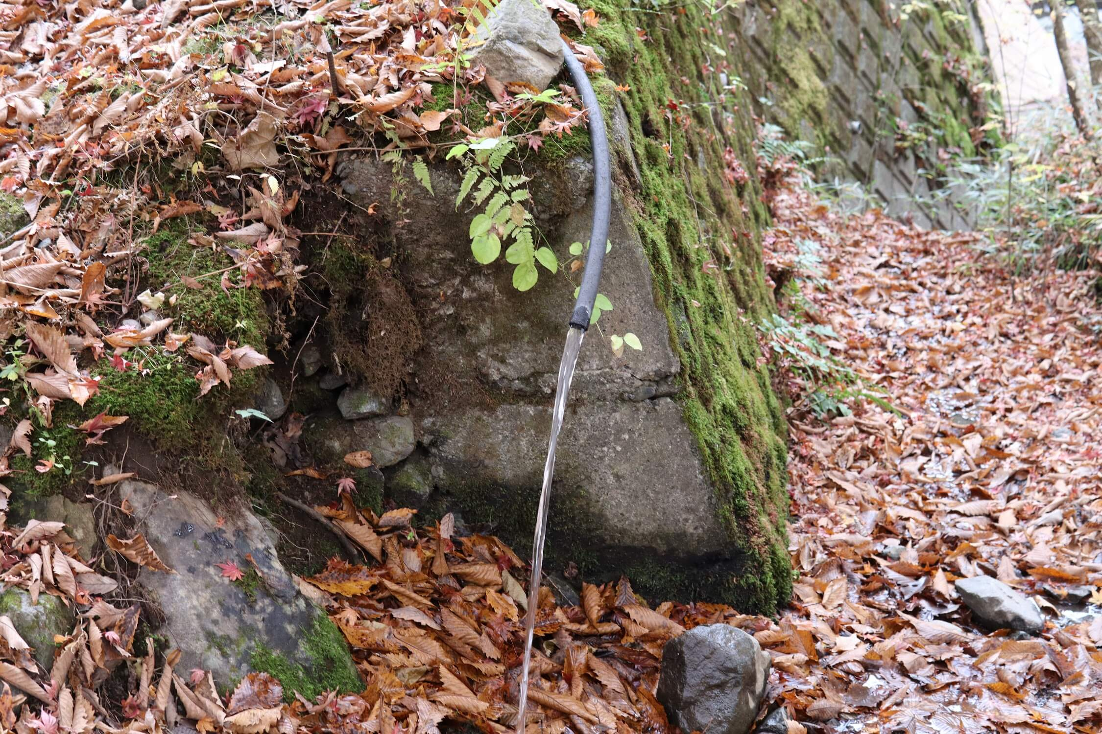 道志の森キャンプ場 水汲み場